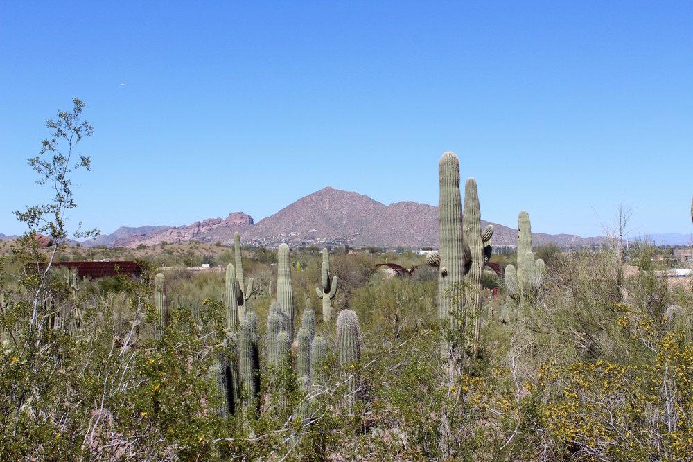 Sonoran Desert Landscape - Camelback Mountain, Phoenix