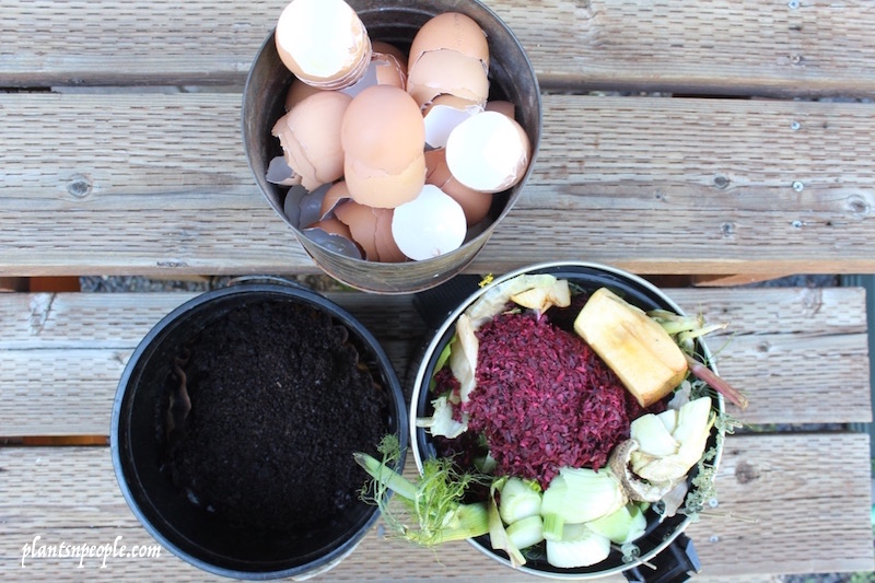 I now keep three containers under my sink: one for eggshells, one for coffee grounds and one for food scraps.  I place the eggshells (ground up in food processor) and coffee grounds directly in my garden but they can also be added to the compost pile.