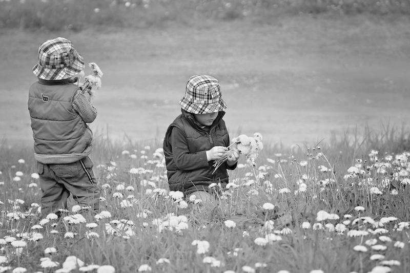 pickflowers