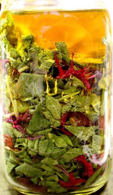 Sage & Beebalm (Monarda didyma) - sore throat & cough remedy