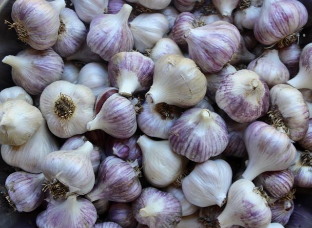 Garlic is easy to grow and easy to store.  The cloves will last for months in an unheated room or root cellar.  I don't dry garlic because I find it becomes harsher and bitter.