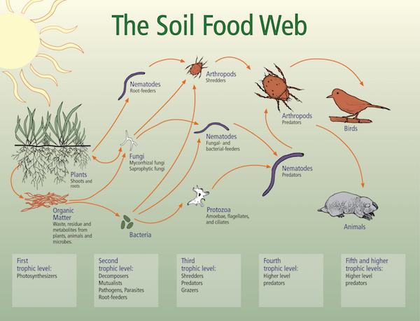 Image: USDA