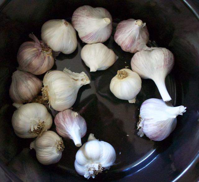 Garlic bulbs in slow cooker