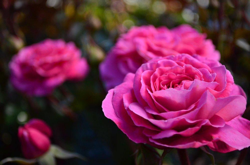 Skyla Rose (SOMlasky)