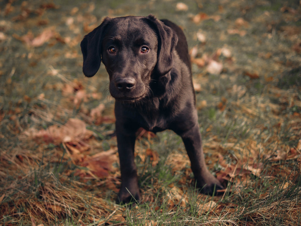 Fall Pet Photography
