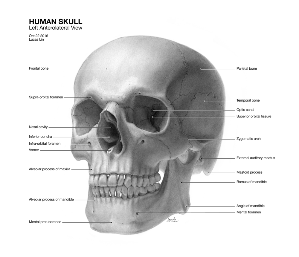 skulllucas