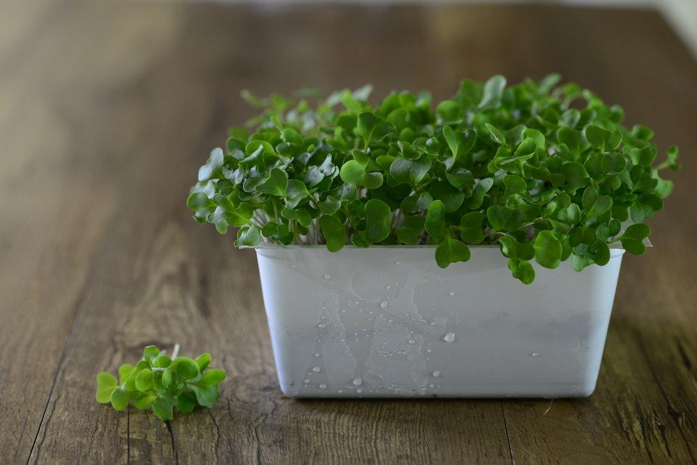 _DSC0425 broccoli.JPG