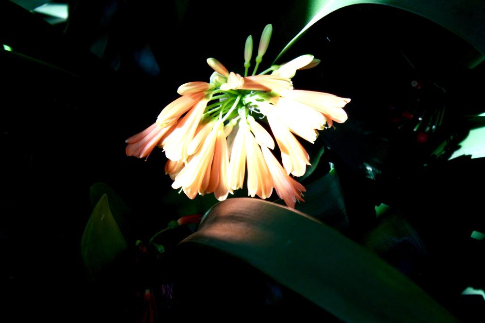 typical flower Tenerife Botanic Garden Puerto de la Cruz