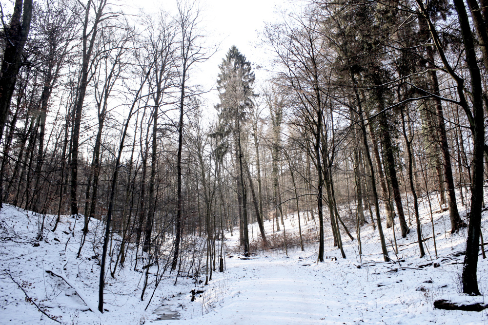 winter forest germany