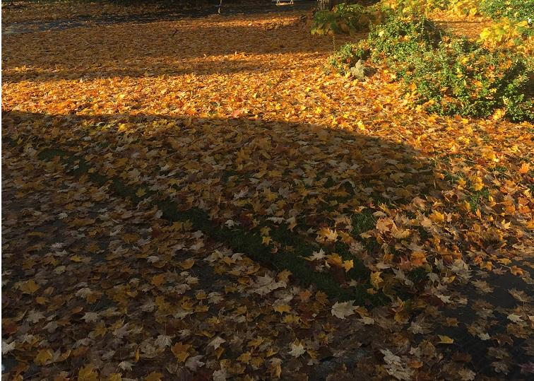 2018 Fall Leaves 2.JPG