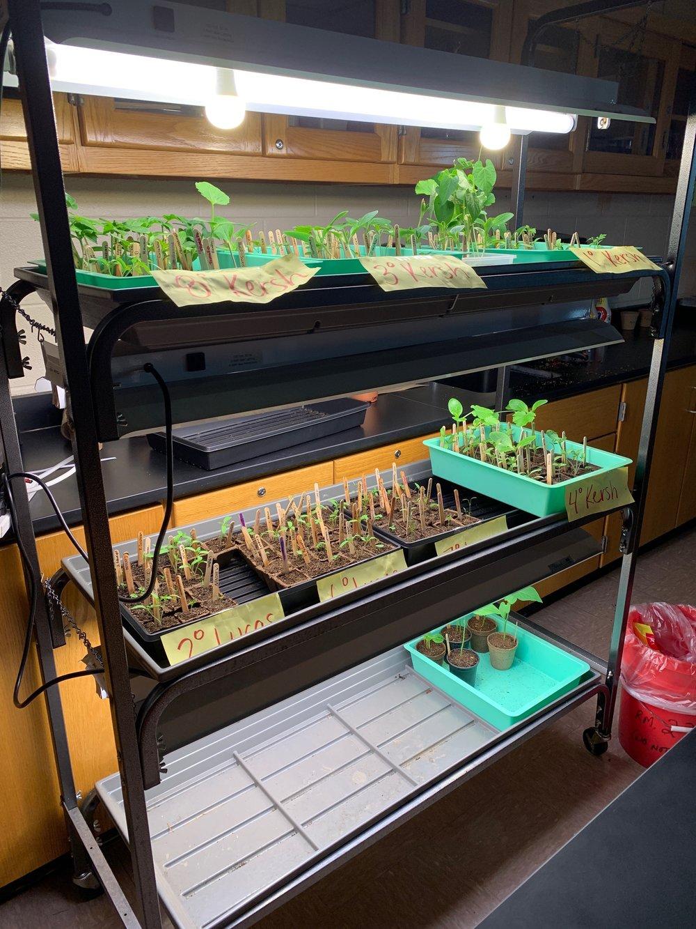 Student Plants 3.JPEG