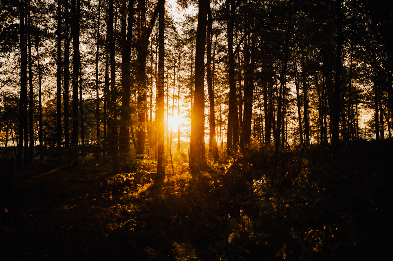 brollop-halmstad-brollopsfotograf-bohemiskt-bröllop-bohemian-lantligt-skogsbrollop-0002.jpg