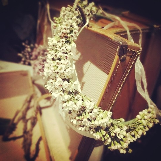 vintageheadresswaxflower