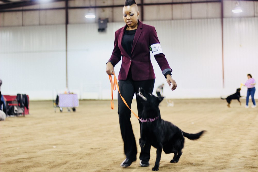 Onyx received her AKC Companion Dog Title at just 1 year of age! - High Trial Scores of 198/200, 196/200 and 194/200.