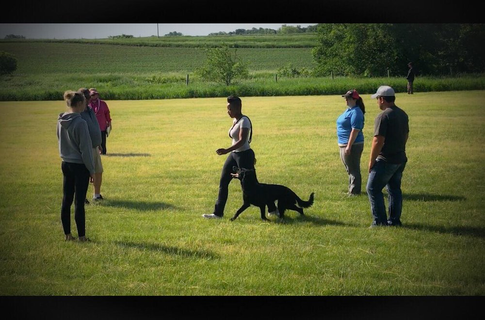 Onyx competed at the 2018 Spring Mid-Iowa Working Dog competition and Passed her BH title at 1.5 years of age. - Zero insufficient exercises.