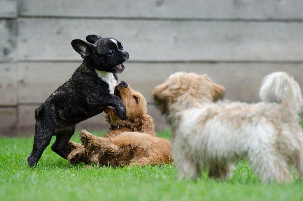 Puppy-Training-2-Wolfen1-1-1024x678.jpg