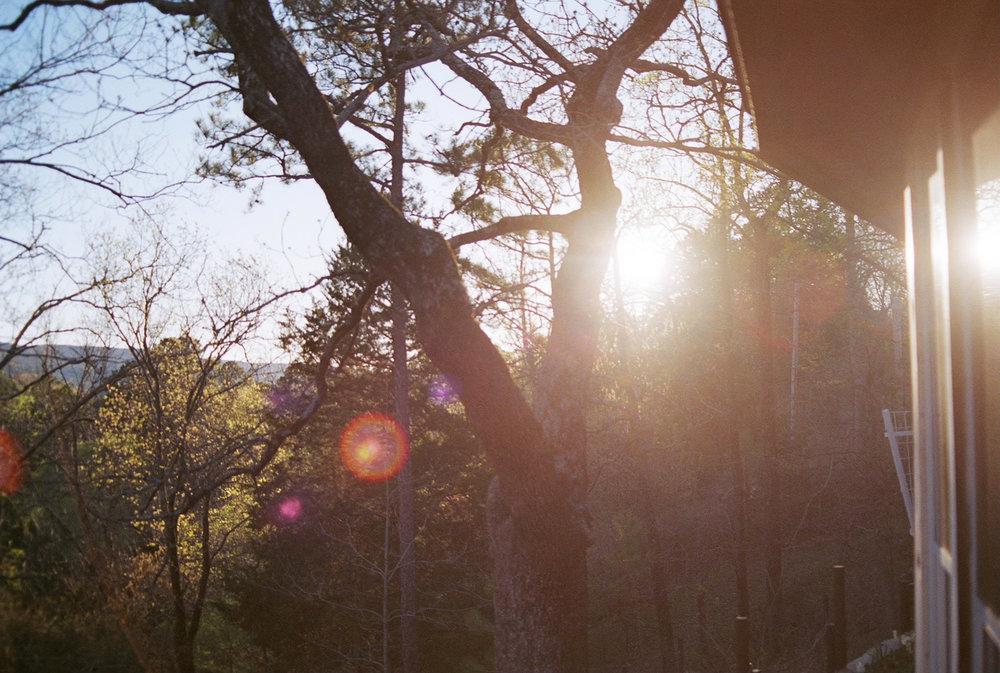 SunlightTree.jpg