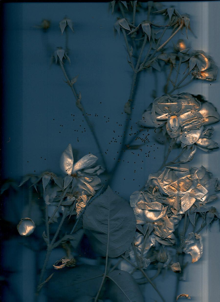 broken_roses_15_2.jpg