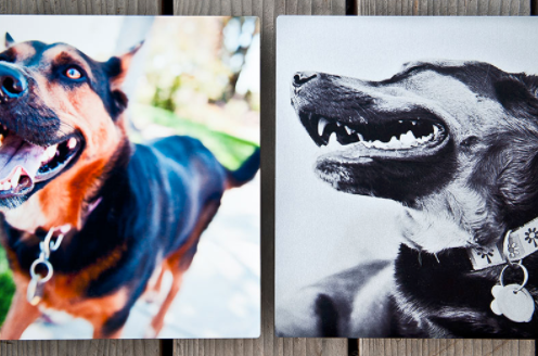 Metal Prints - Metal prints are a NYC Pet Photography favorite! Experience your images in a new definition and clarity with Metal Prints. These show-stopping conversation pieces add an artistic edge and contemporary elegance to your art. For a Metal Print add $200 to the cost on my price list.