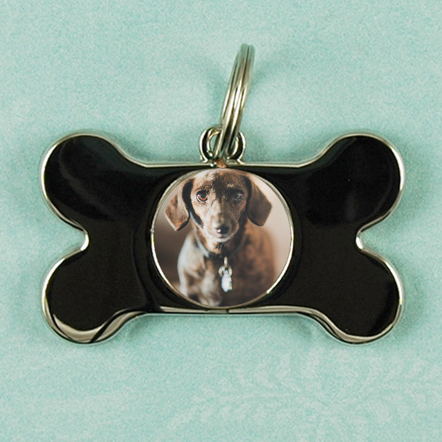 Photo Dog Tag - $75 - Show off your dog's new portraits everywhere you go! 1