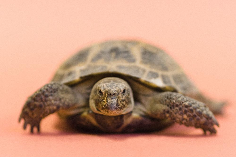 030517 Social Tees Reptiles-36-Edit.jpg