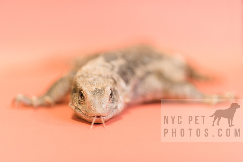 030517 Social Tees Reptiles-23-Edit.jpg