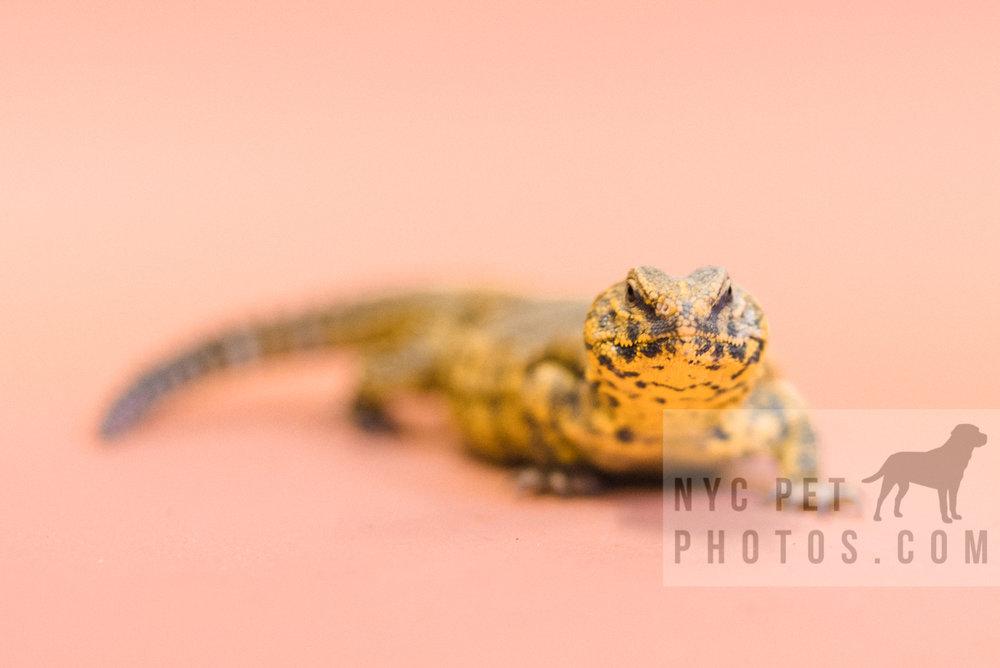 030517 Social Tees Reptiles-46-Edit.jpg