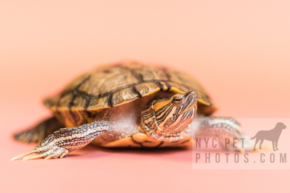 030517 Social Tees Reptiles-47.jpg