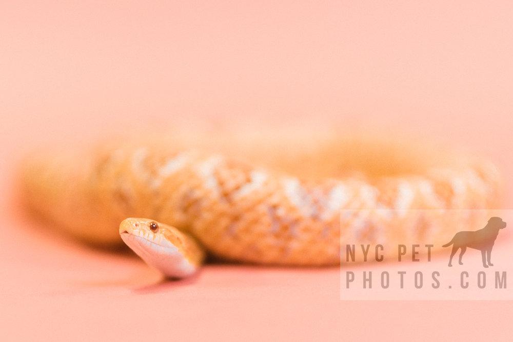 030517 Social Tees Reptiles-53.jpg