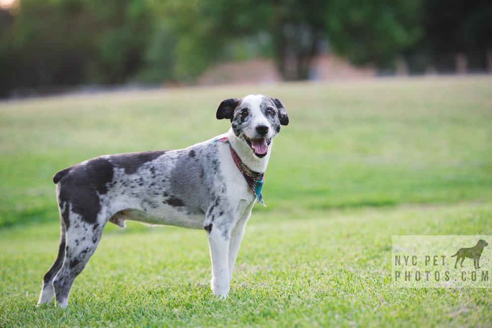 Stray Dog-7.jpg