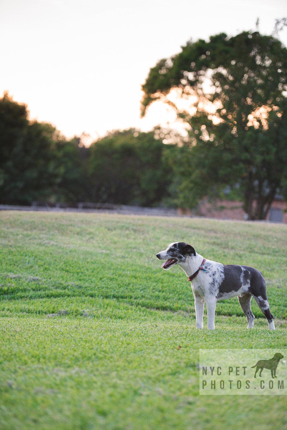 Stray Dog-17.jpg