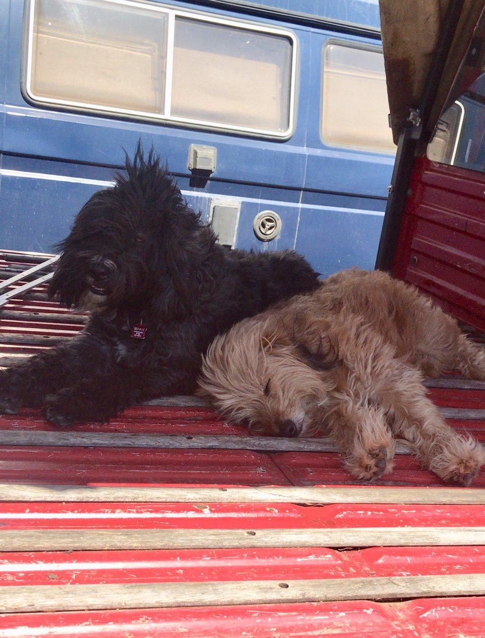 Benny & Choque' -