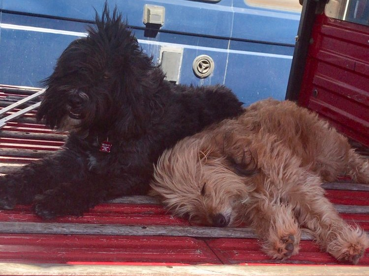 Benny & Choque' - Meet the Outwesty shop dogs. Benny looks a bit like Dave and Choque a bit like Ben.