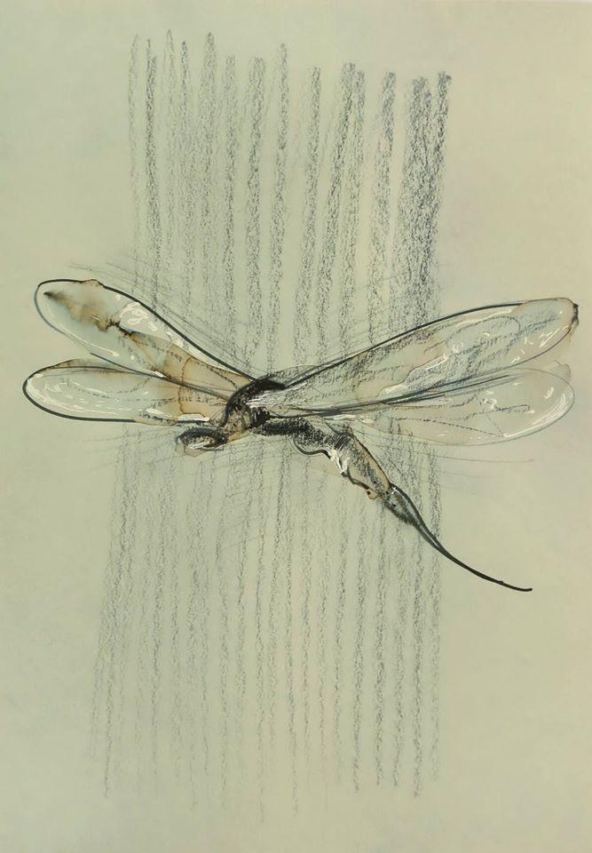 leali della libellula.jpg