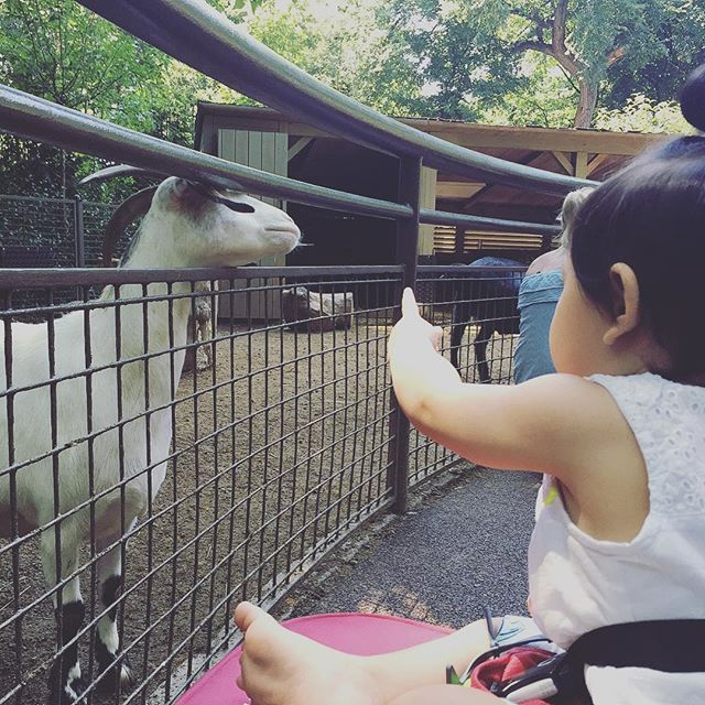 She LOVED Tisch Children's Zoo at Central Park! ♥️ #babyadventures #centralparkzoo