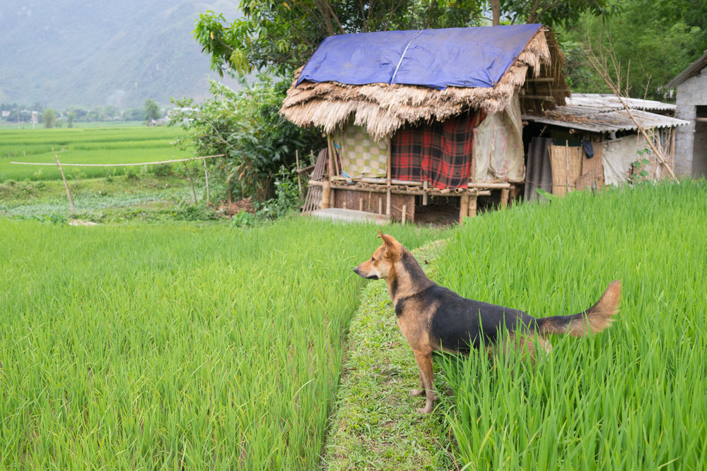love-the-locals-vietnam-mai-chau-apr-2017_0028.JPG