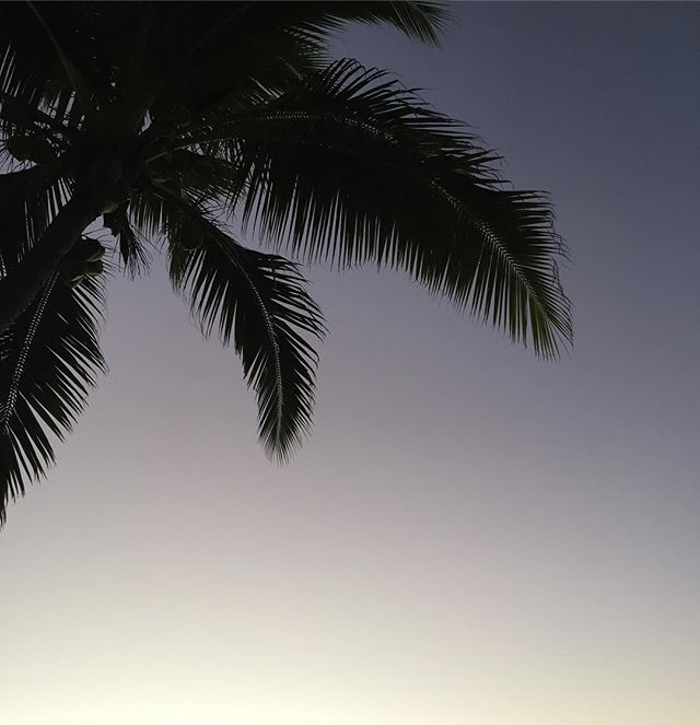 Love nature's beautiful colour transitions at dusk in the Pacific . As the sun disappears the sky turns lilac and gold. #peacefulness #pacificparadise #pacificholiday #nofiltertoday #iphone6s #coconutpalm #dusk #sunsetlovers #love_minimal #minimalove #minimalmood #SNSroadtrip #stocknotstock @tourismfiji #Fijinow