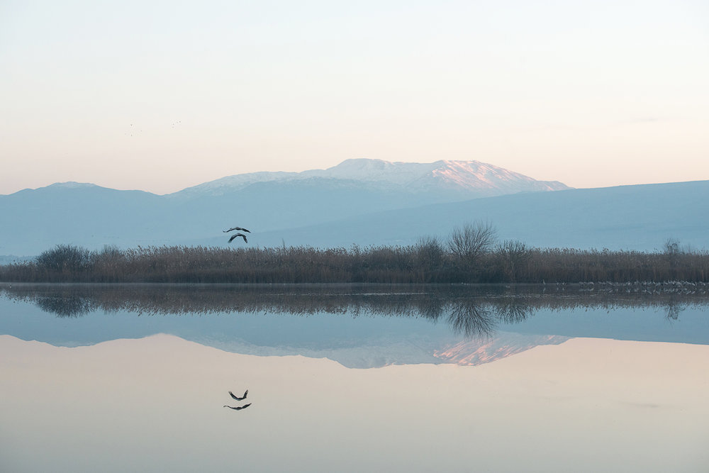 MakeEat_Hula_Valley_Sigal_Mizrahi_6