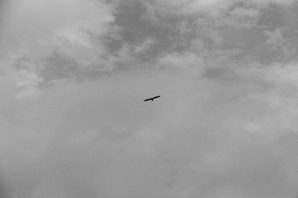 zahia-2.jpg