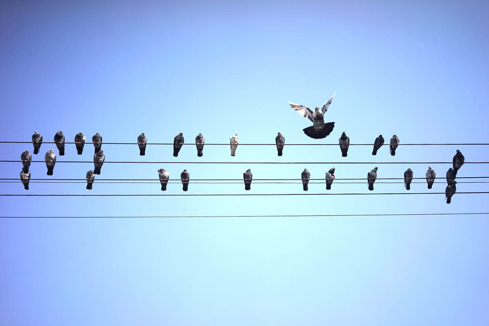 Tel Aviv, pigeons on power lines
