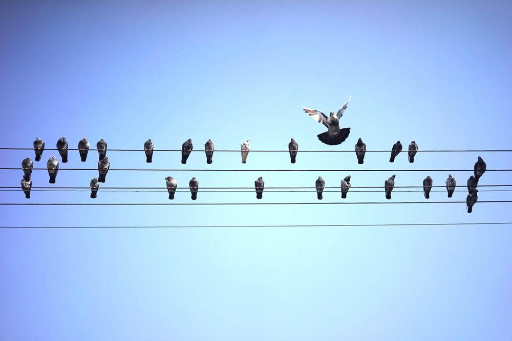 Tel Aviv, pigeons on power lines