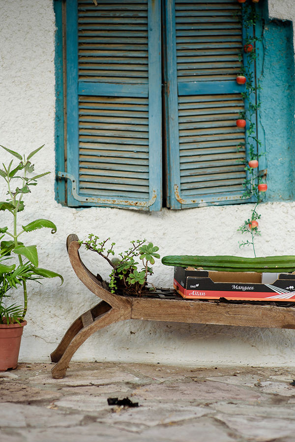 bench, cactus, succulents, lifestyle, home, style, design, village, gipsy, soul, nature, jewish, house, garden, window