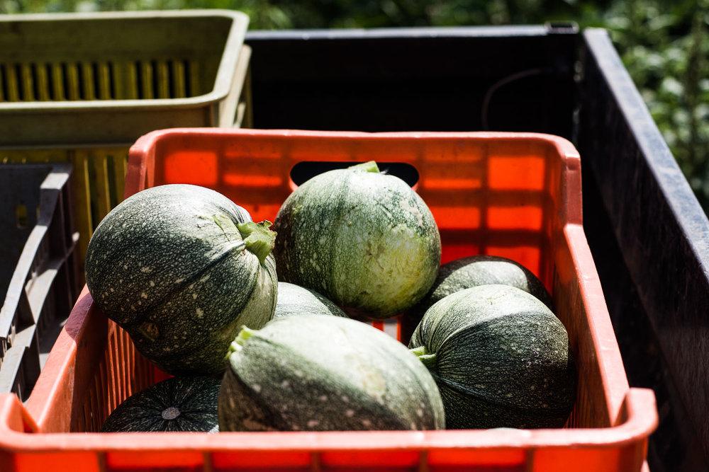 freshly picked veggies, organic farm, merhavia, jezreel valley, green vegetables in red box