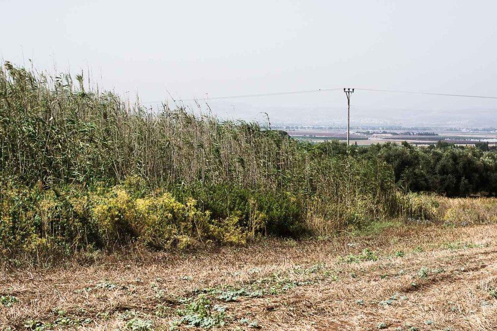 organic farm merhavia, organic field, wildlife in the field, jezreel valley
