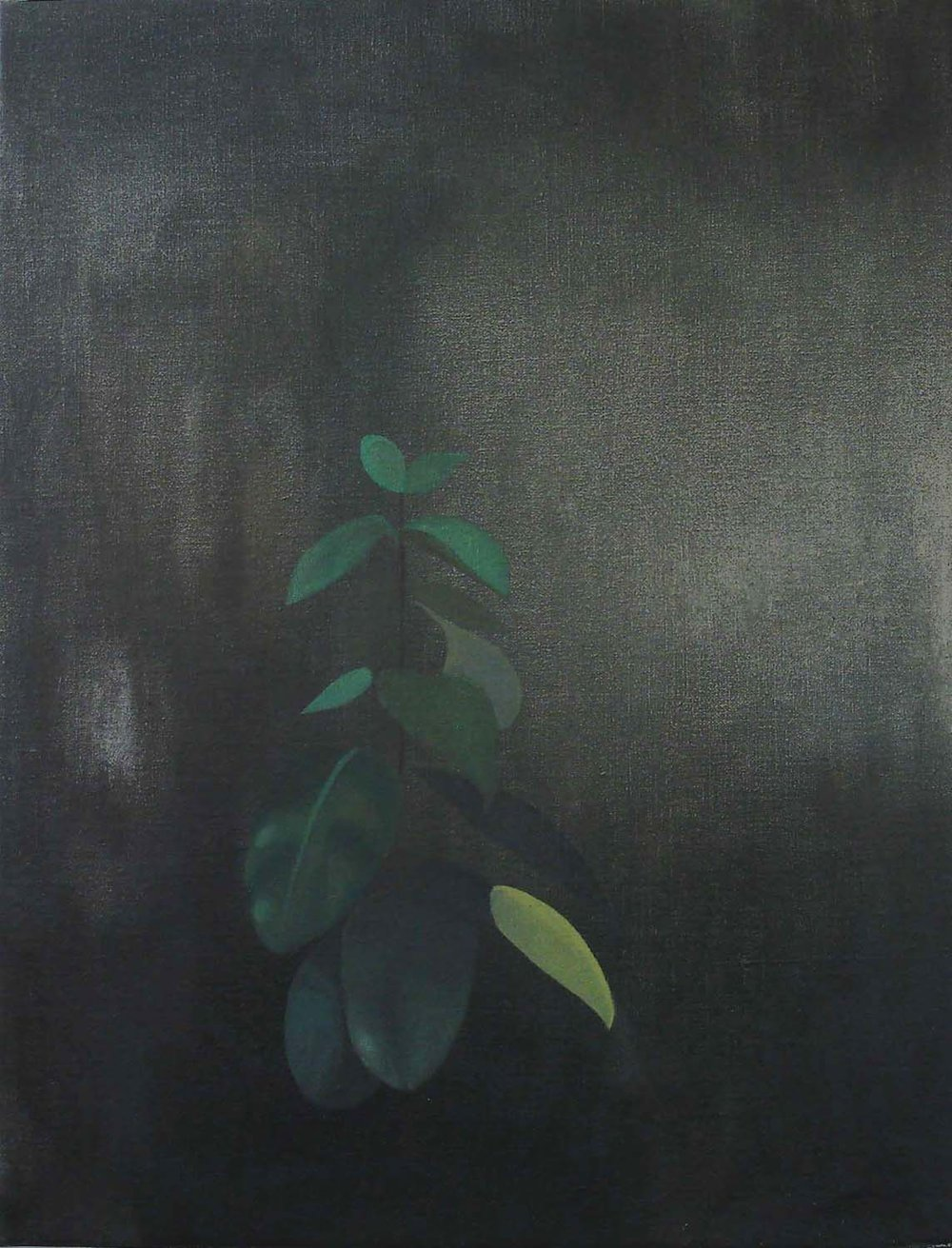 Dark Plant    2005, oil on canvas, 66 x 51cm