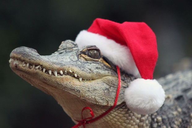 Christmas Croc 1.jpg