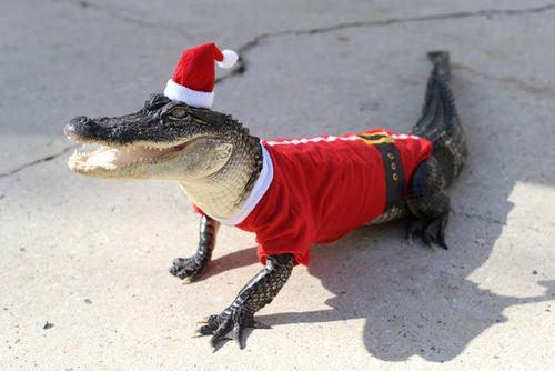 Christmas Croc 2.jpg