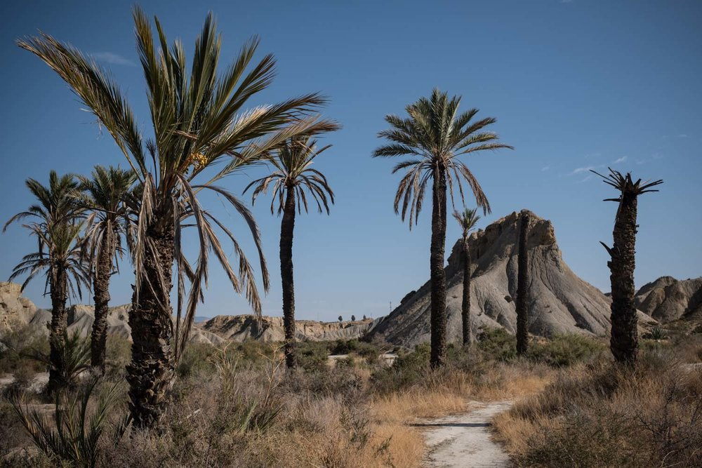 Palm trees in the desert, first brought over by the Moors.