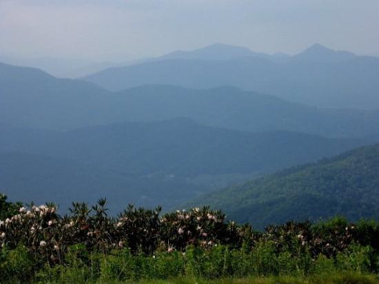 pisgah-forest.jpeg