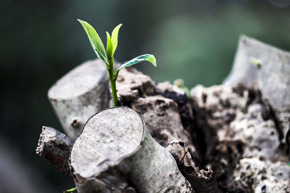 grow-781769.jpg